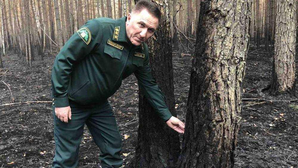 В двух брянских районах оценили ущерб от лесных пожаров