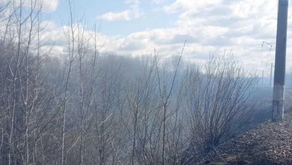 Брянские спасатели за сутки потушили пять лесных пожаров