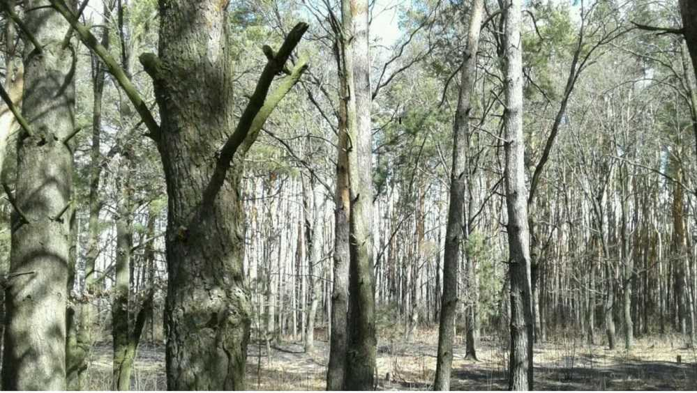 Под Почепом шесть спасателей потушили лесной пожар