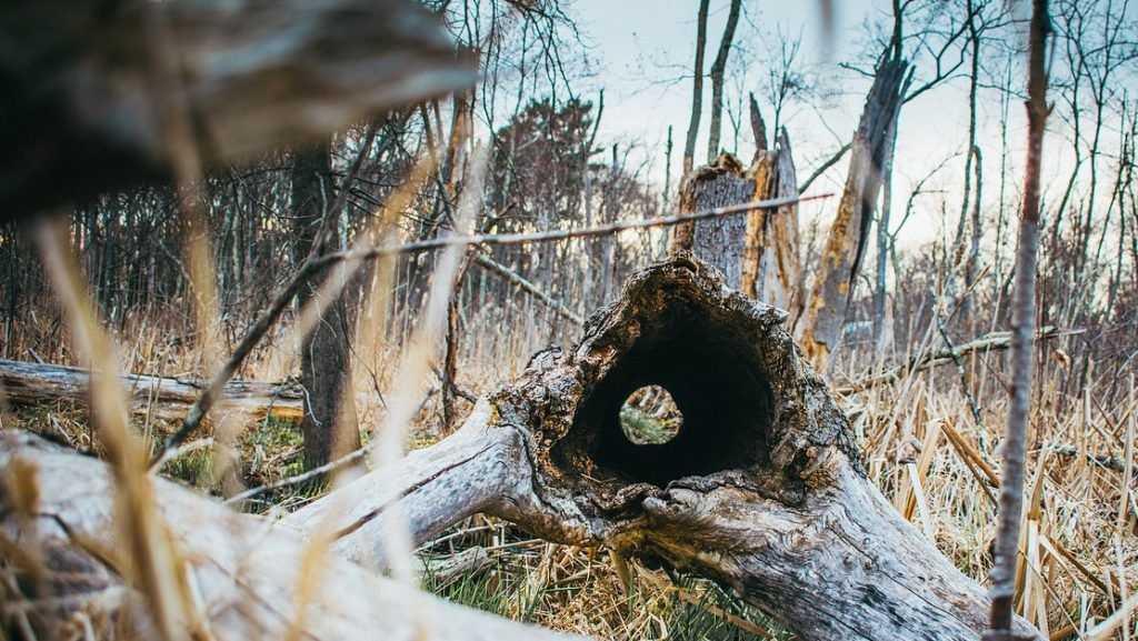 Следствие приступило к разгадке тайны страшной находки в брянском лесу
