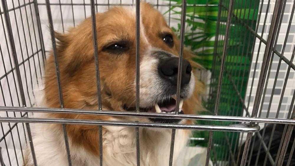 В Брянске счастливо завершилась история с расстрелянной собакой