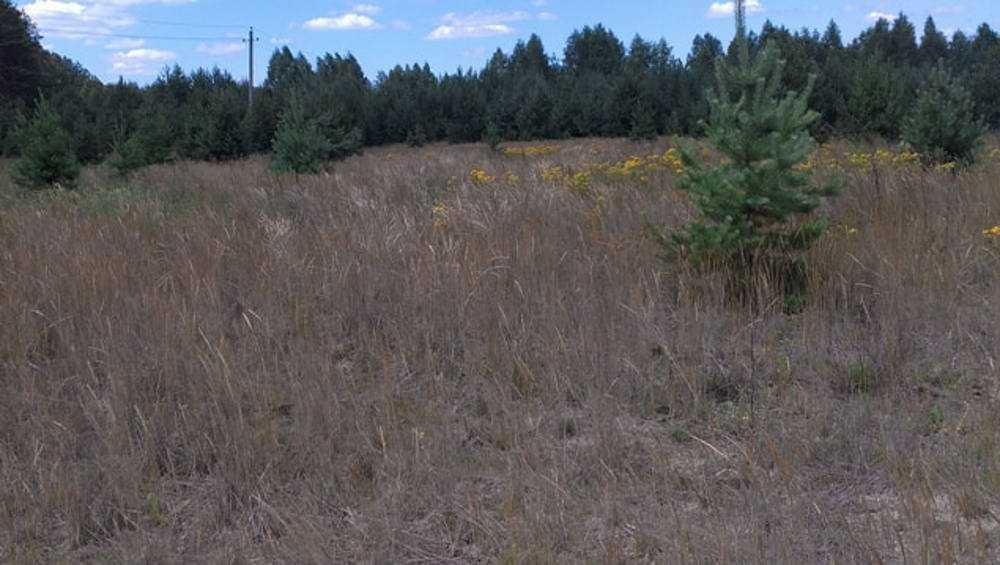 Клинцовского фермера оштрафовали на 30 тысяч рублей за бурьян на полях