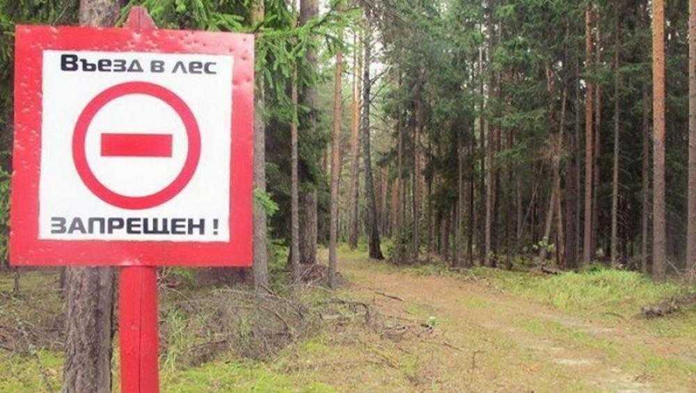 В Брянской области продлили запрет на посещение лесов