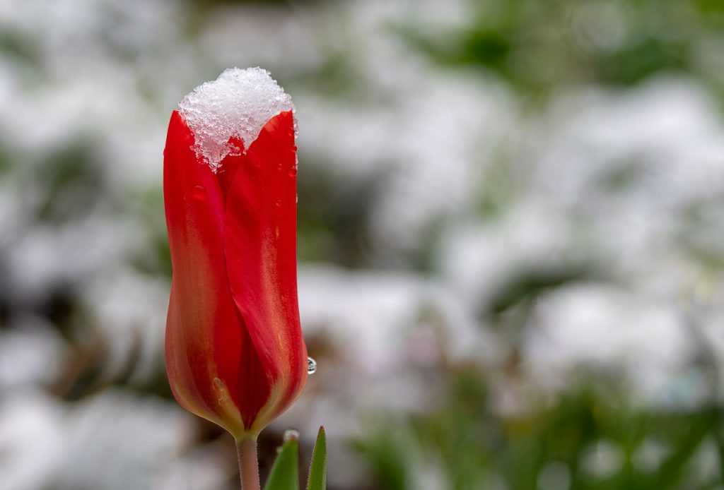В Брянской области утром 7 мая похолодает до 2 градусов мороза