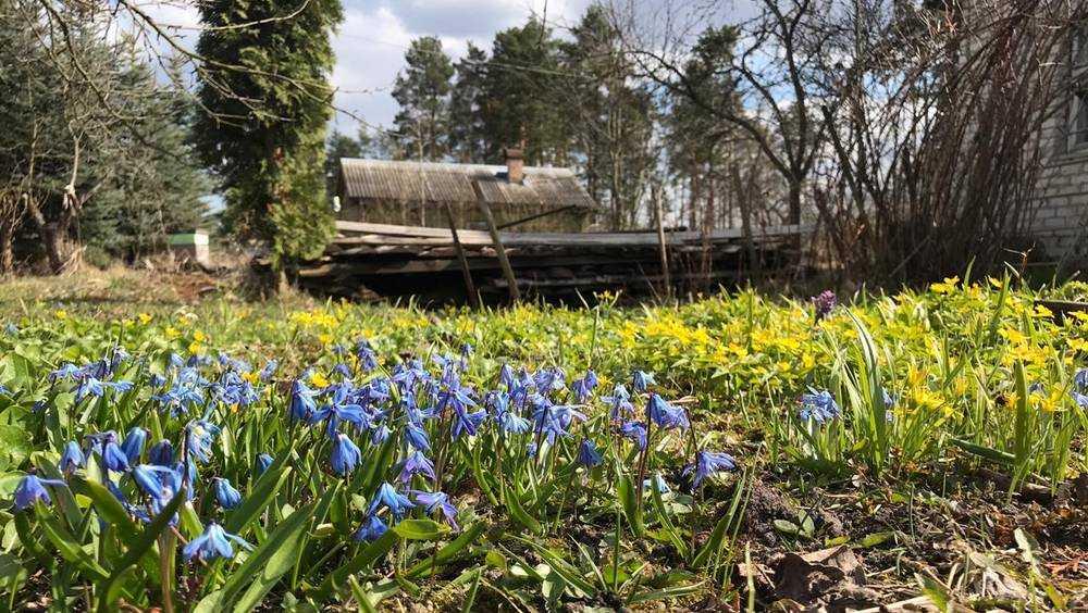 В Брянскую область 9 апреля придёт 18-градусное тепло