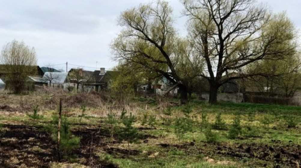 В Брянском районе активисты «Справедливой России» посадили 100 деревьев