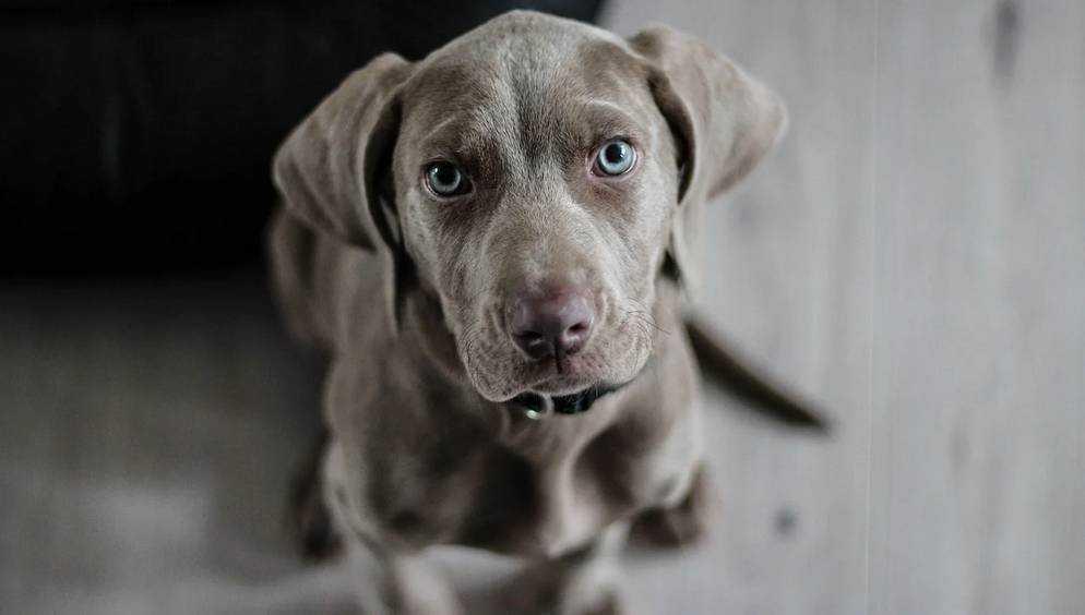 Жители Брянска призвали спасти закрытую на балконе собаку