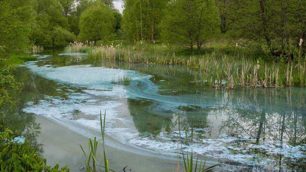 Жителей брянского поселка Бытошь встревожил бирюзовый цвет озера