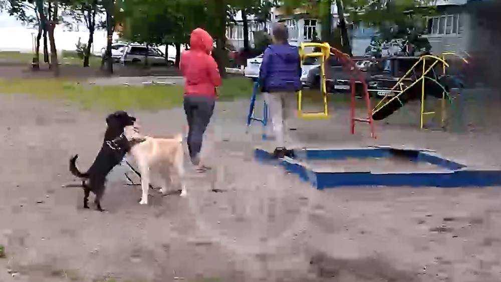 В Брянске собачницы загнали детей на теннисный стол во дворе