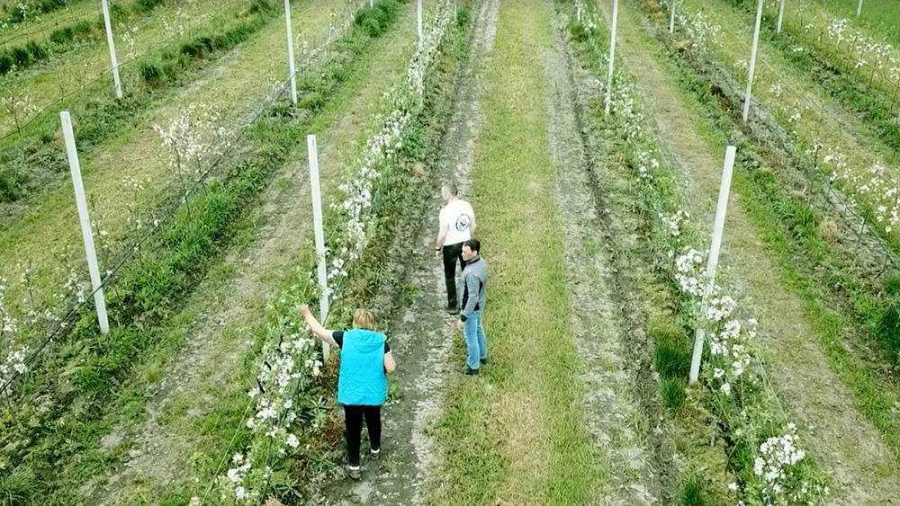 В «Брянском саду» получат первый урожай вкусных яблок