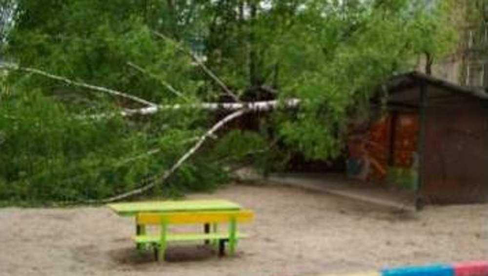 В Брянске на беседку детсада «Сказка» рухнуло дерево