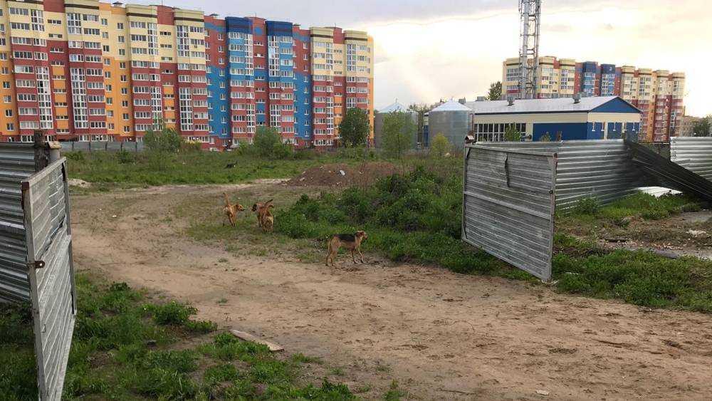 В Брянске стаи собак стали хозяевами улиц
