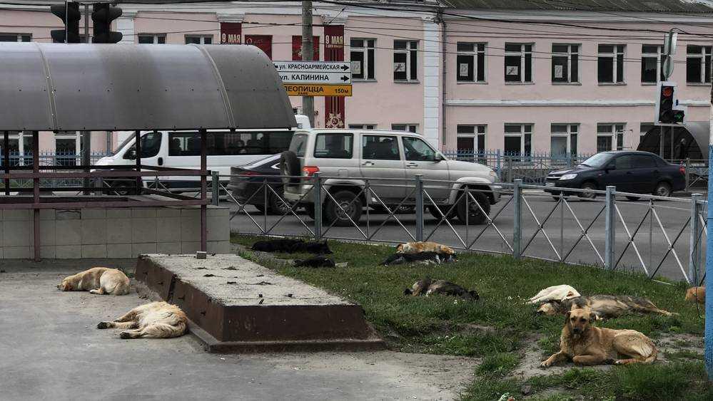Территория у брянского автовокзала перешла под власть собак