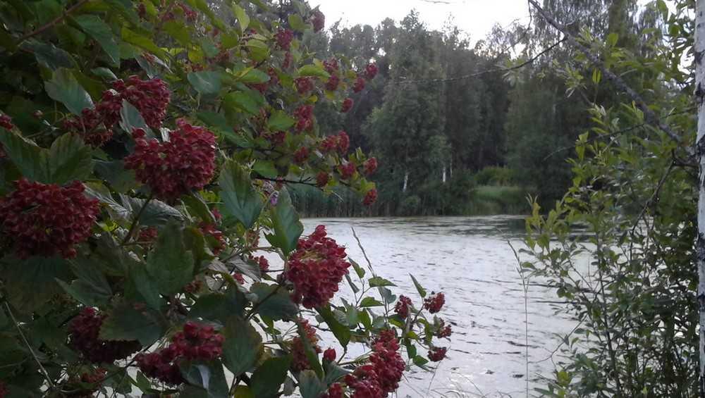 Брянской области 26 мая пообещали дождь и 18-градусное тепло