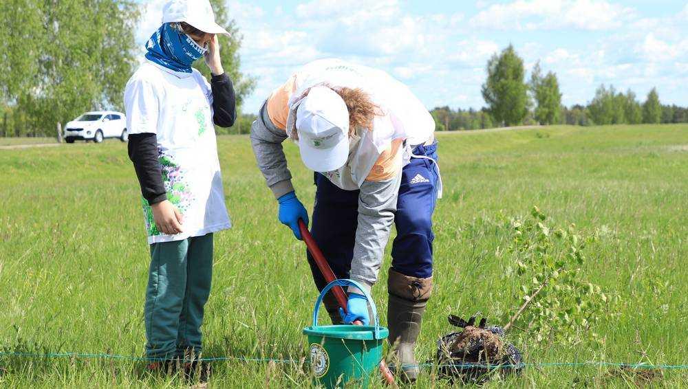 В Брянской области посадили березку Анастасью