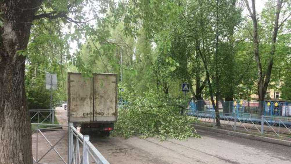 В Советском районе Брянска дерево рухнуло на дорогу