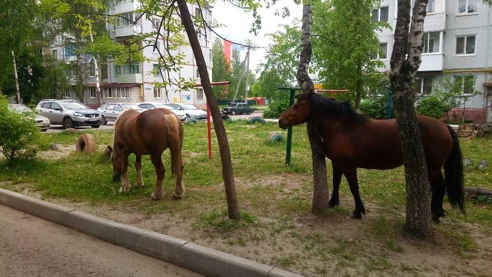 Жителей Брянска развеселил конный патруль во дворе многоэтажки
