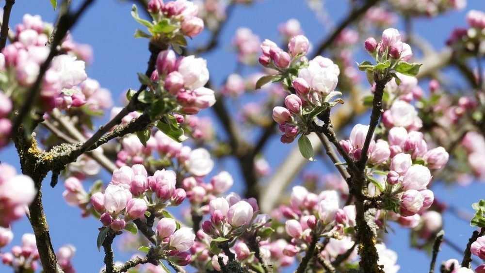 Настоящее летнее тепло придет в Брянскую область