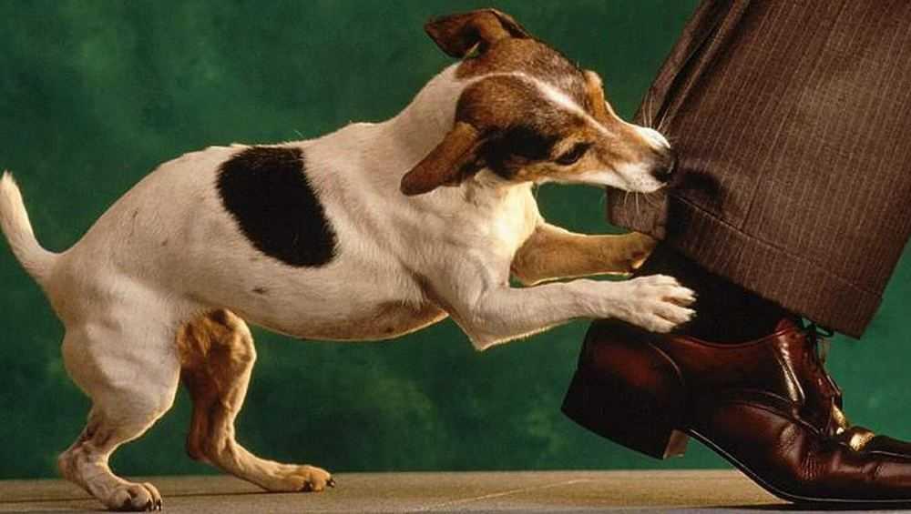 Жителя Брянска на улице беспричинно укусила бродячая собака