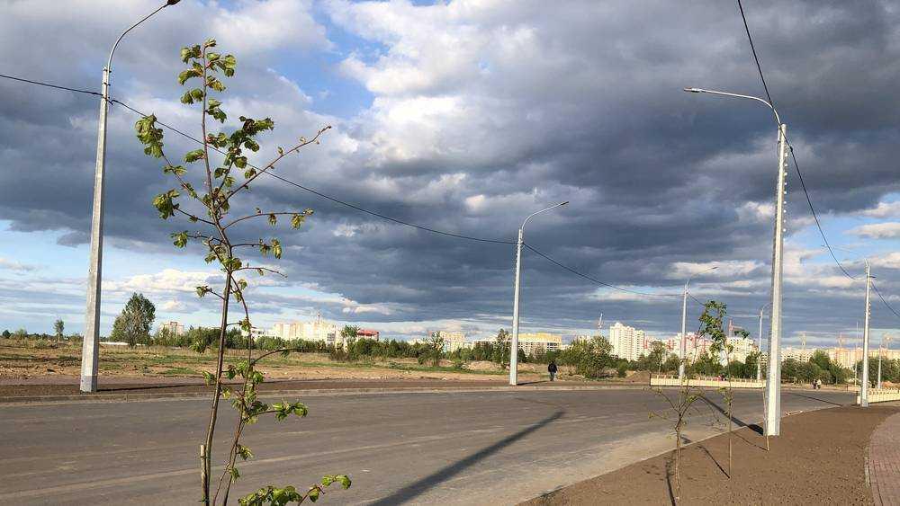 В Брянске посадили первые деревья вдоль новой дороги на Советской