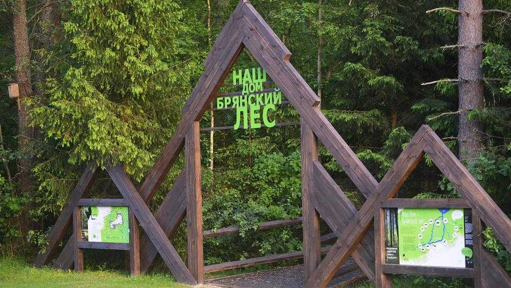 В Брянской области началась акция«Сохраним лес»