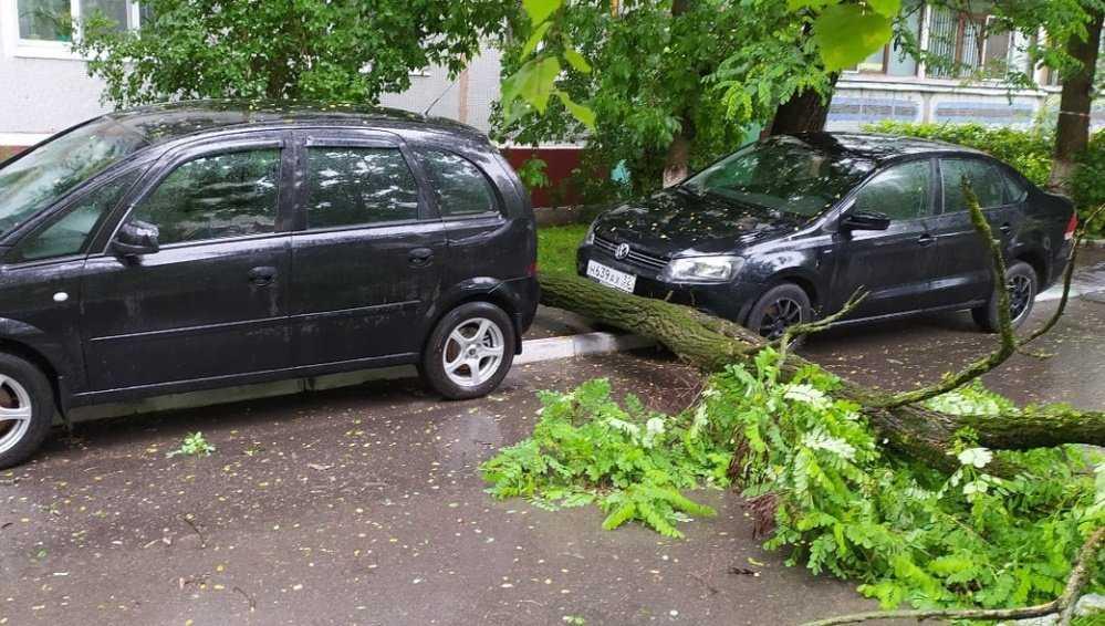 В Брянске дерево упало между машин на улице Брянского Фронта