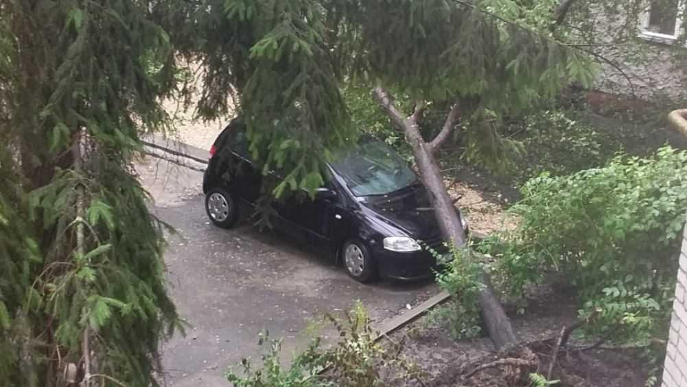 В Брянске дерево рухнуло на автомобиль на улице Горького
