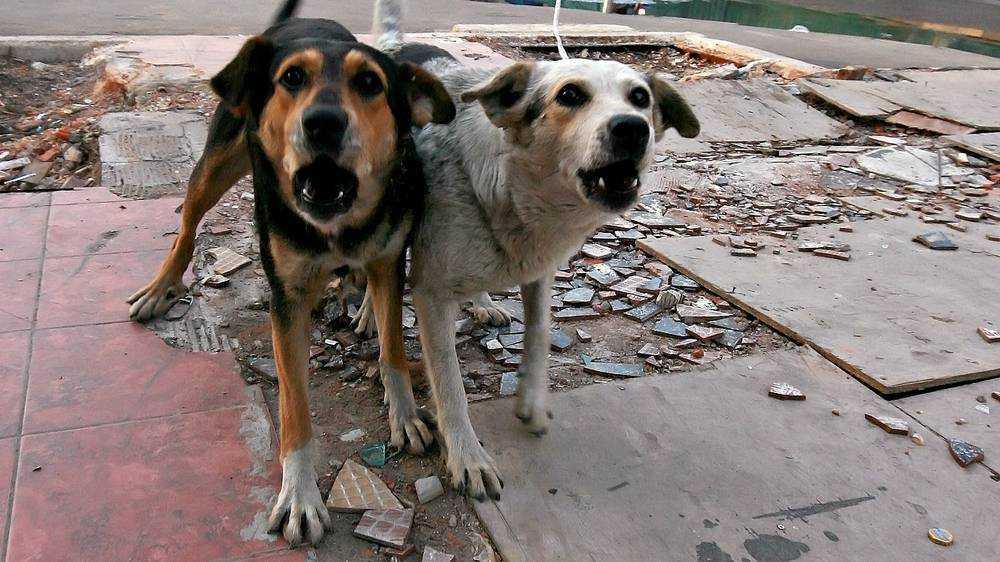 В Брянске на ребёнка напали пять агрессивных соседских собак