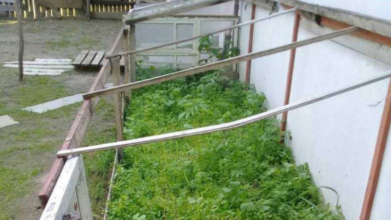В Новозыбкове за наркотик для куриц осудят местную жительницу