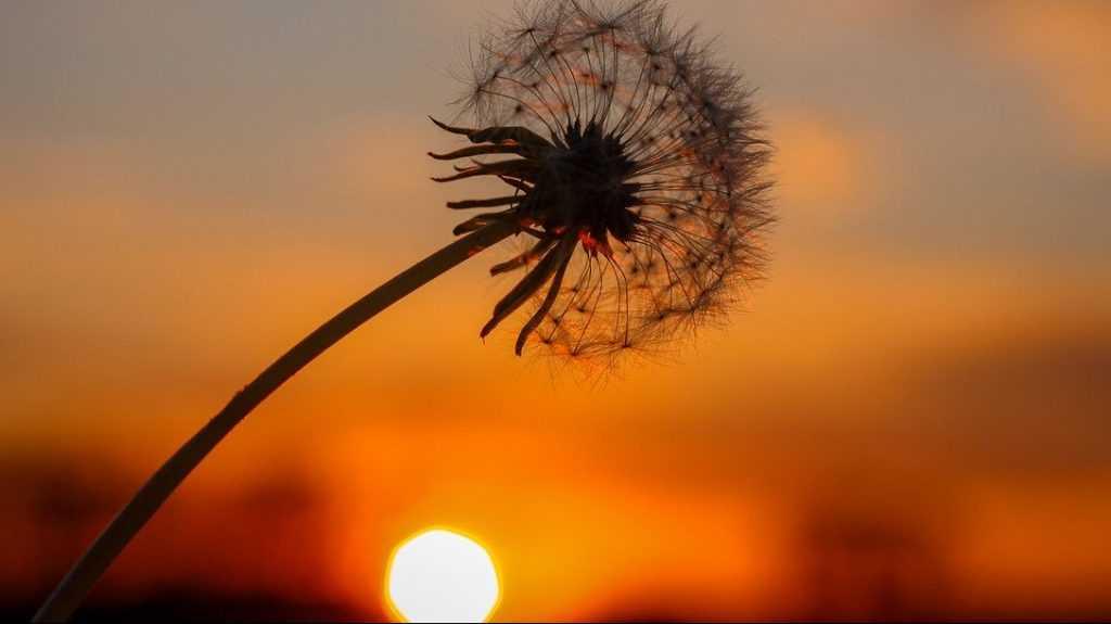 Жителей Брянской области предупредили об «опасном солнце»