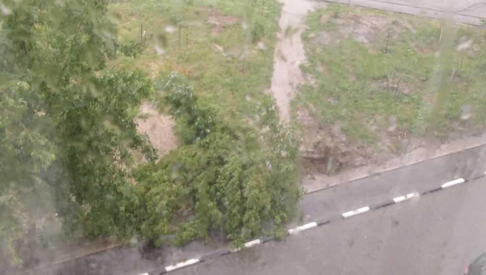 В Брянске из-за ливня упали деревья и рухнула плитка в переходе
