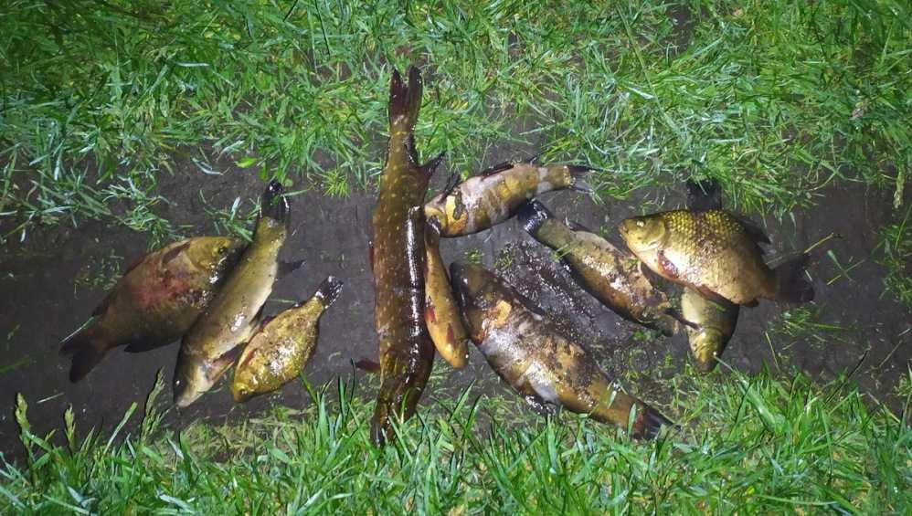 В Стародубе брянцы попались на незаконной рыбалке с помощью ловушек