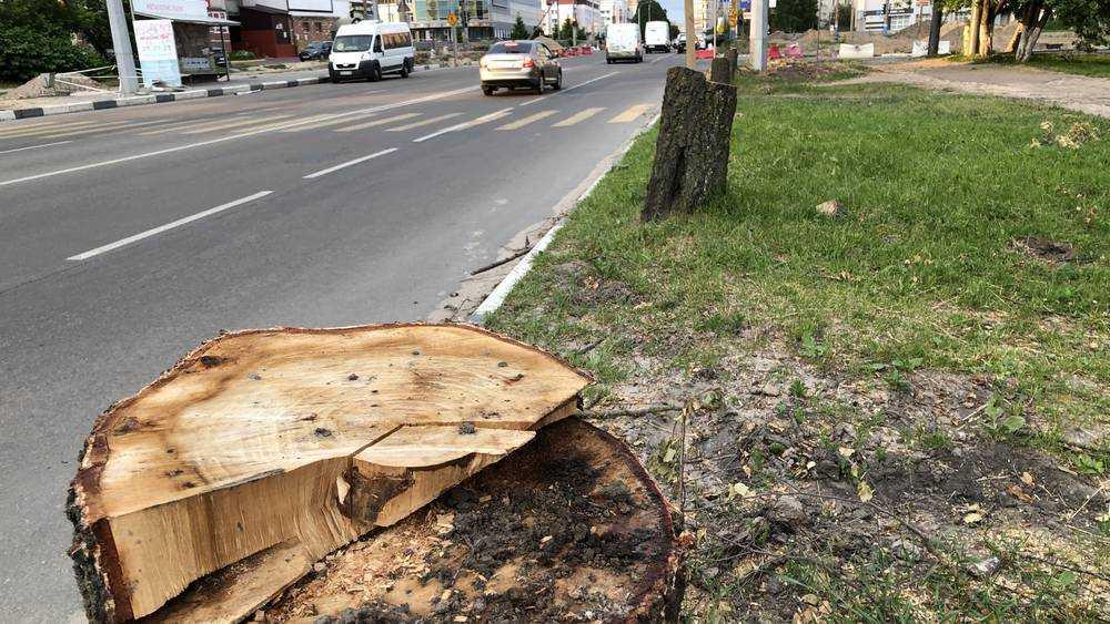 В Брянске на улице Крахмалева спилили березы