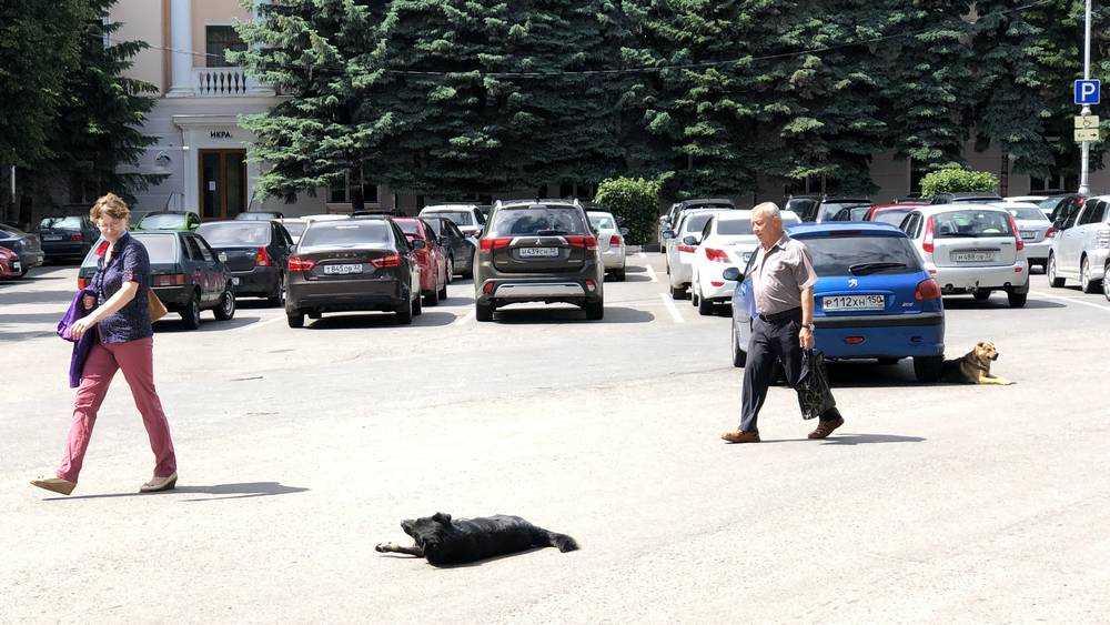 Круглый сквер Брянска заняли грозные собаки