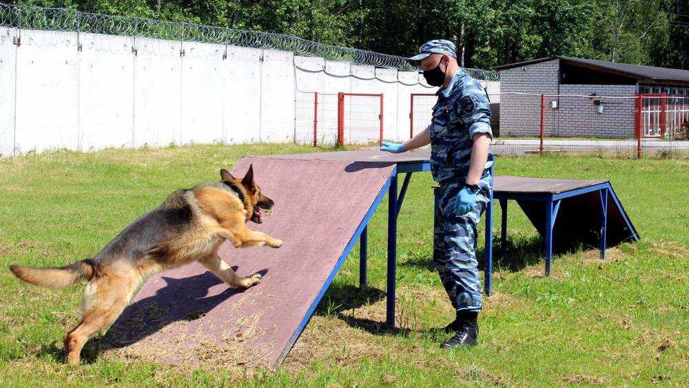 Полсотни собак стали надежными помощниками брянской полиции