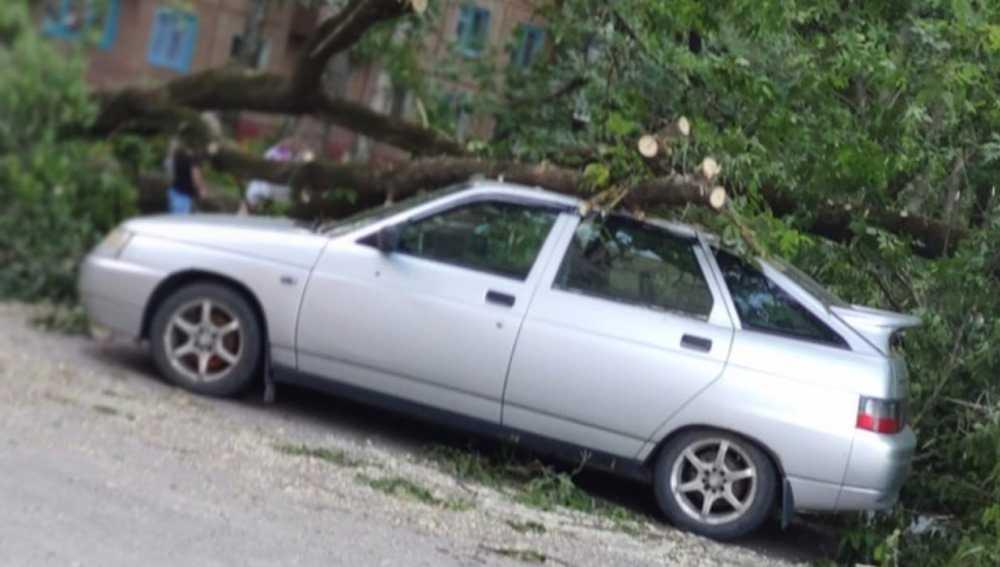 В Брянске коммунальщики повалили дерево на автомобиль