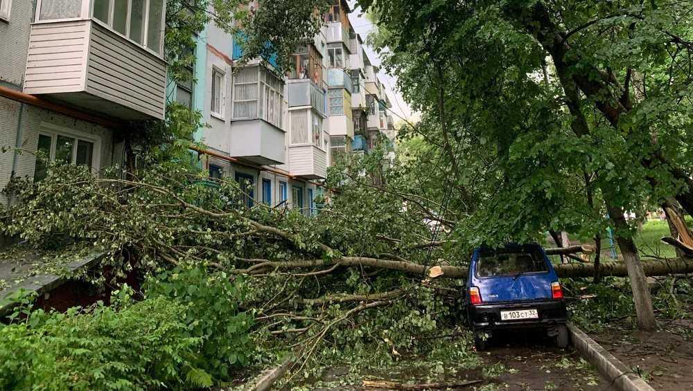 В Брянске на улице Костычева рухнувшее дерево разбило две машины