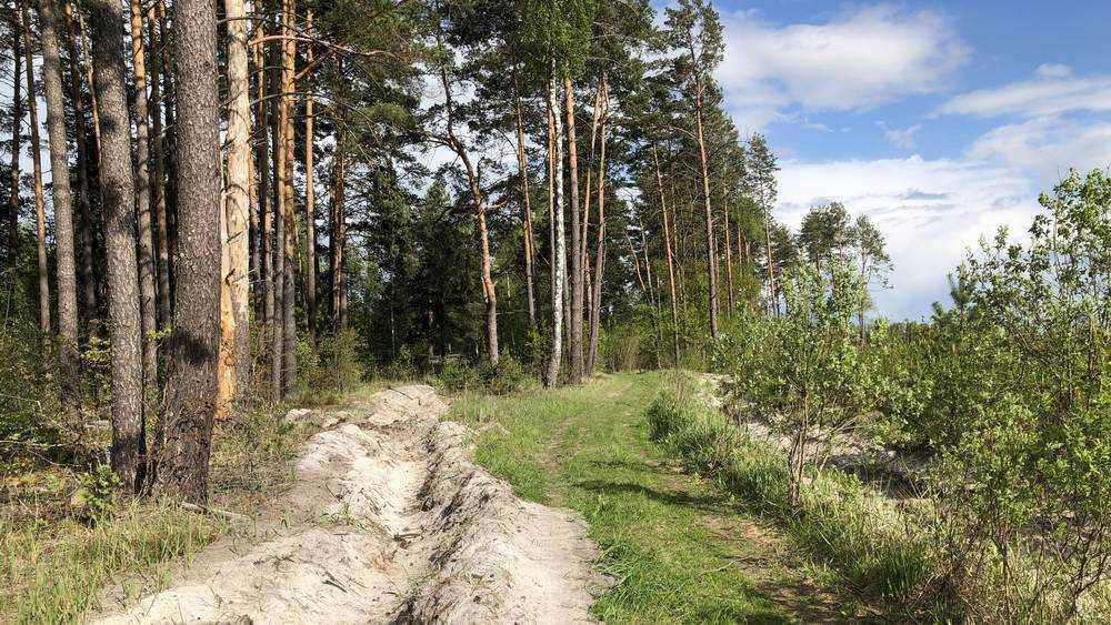В Брянской области спасли заблудившегося в лесу грибника