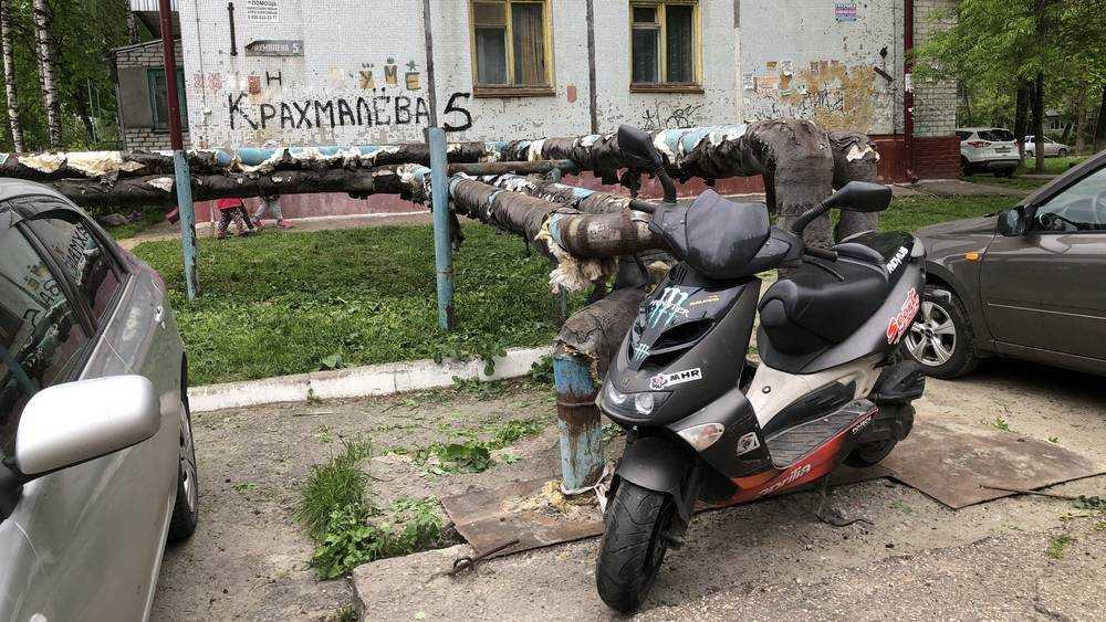 В Брянске удавы стали использоваться для охраны