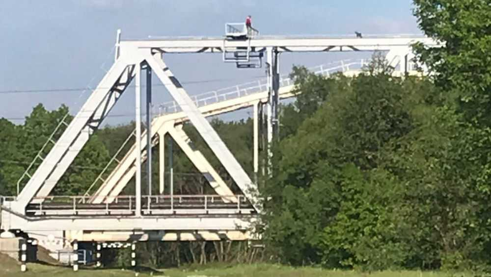 Брянцы ужаснулись при виде разгуливавшего по ферме моста парня