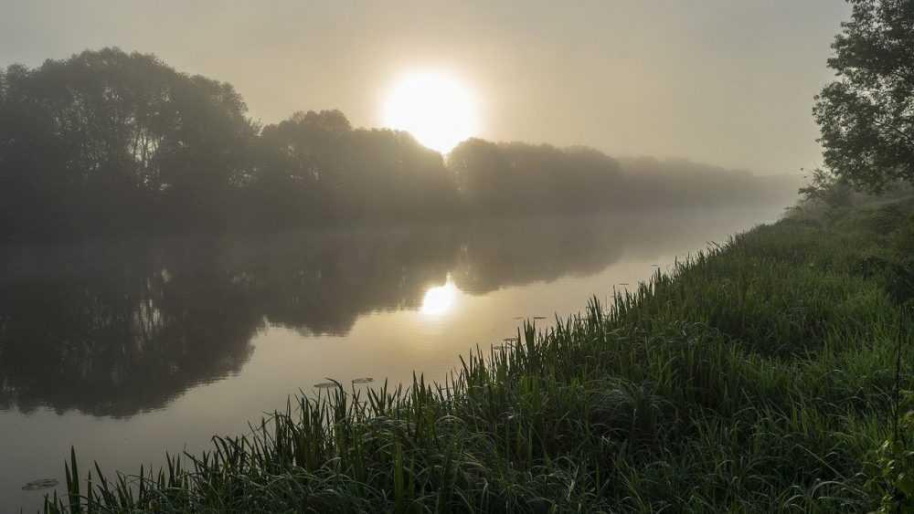 Брянской области 25 июня пообещали туман и 27-градусную жару