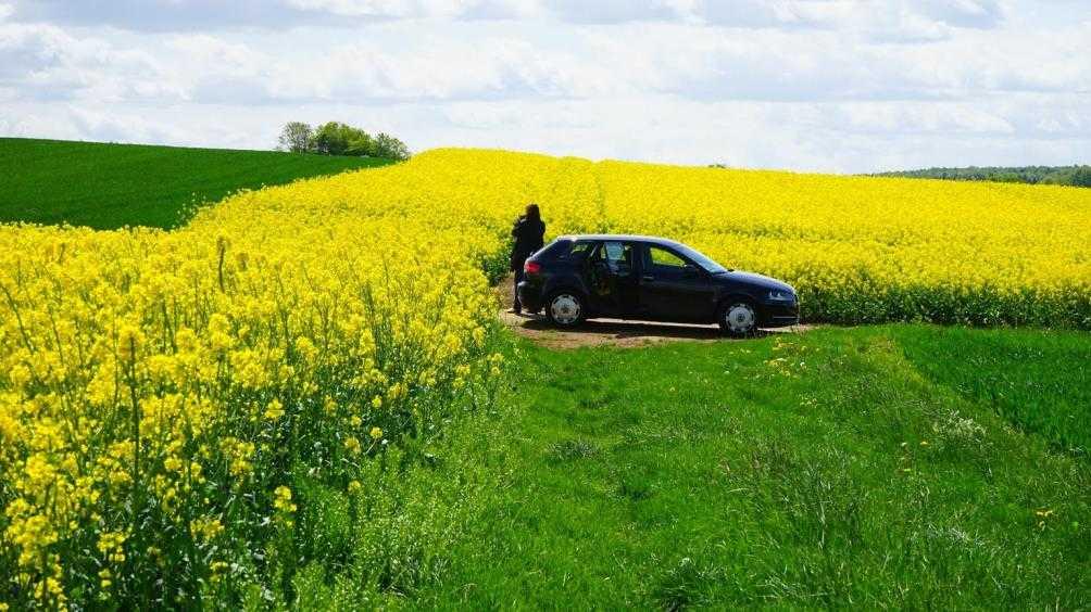 Раздавившего пшеницу водителя автомобиля накажут за ложь об угоне
