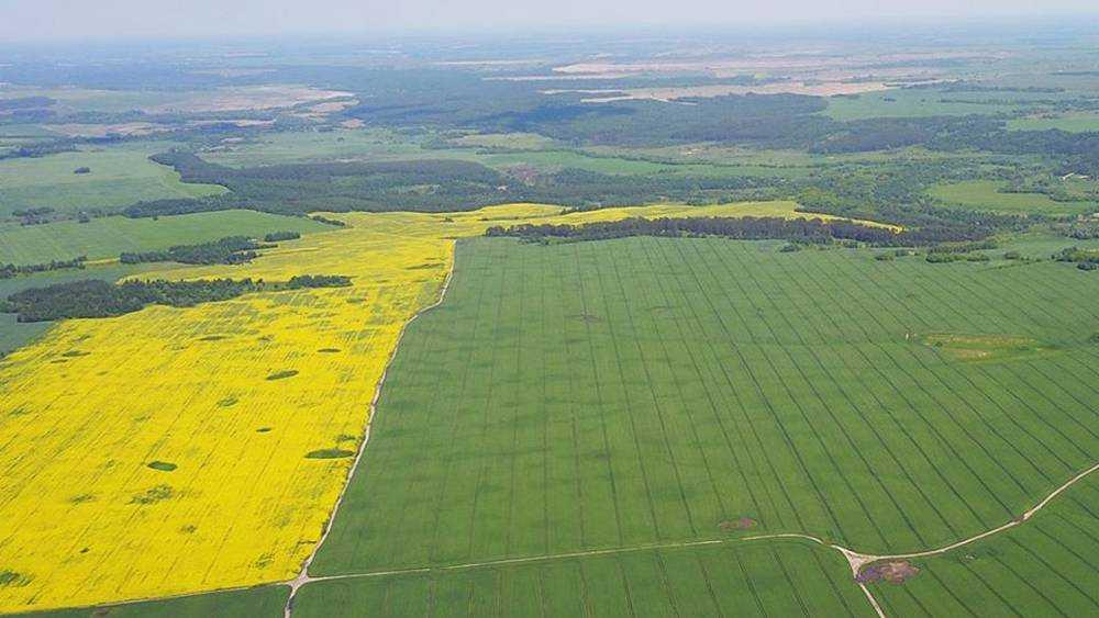 Сельское хозяйство Брянской области выросло на 2,5 процента