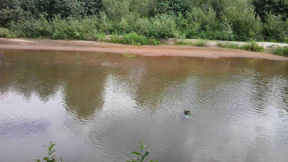 В брянских реках и озерах стала исчезать вода