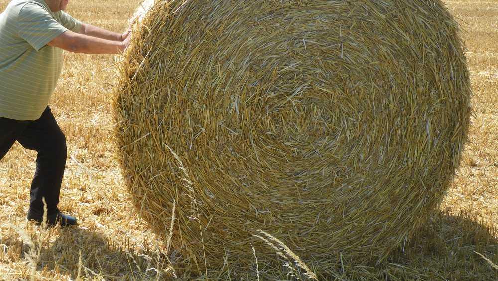 Под Брянском для домашней скотины украли с поля 10 рулонов сена