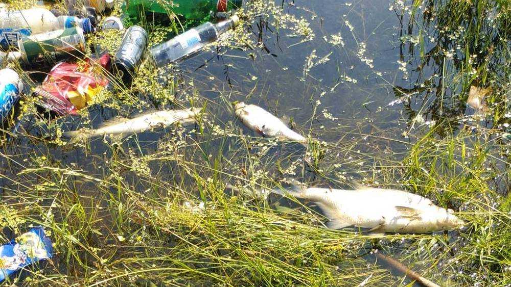 Брянская прокуратура: Рыба в Десне погибла из-за аномальной жары