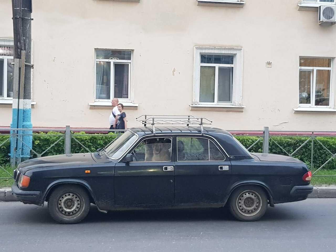 Жителей Брянска развеселила собака за рулём «Волги»