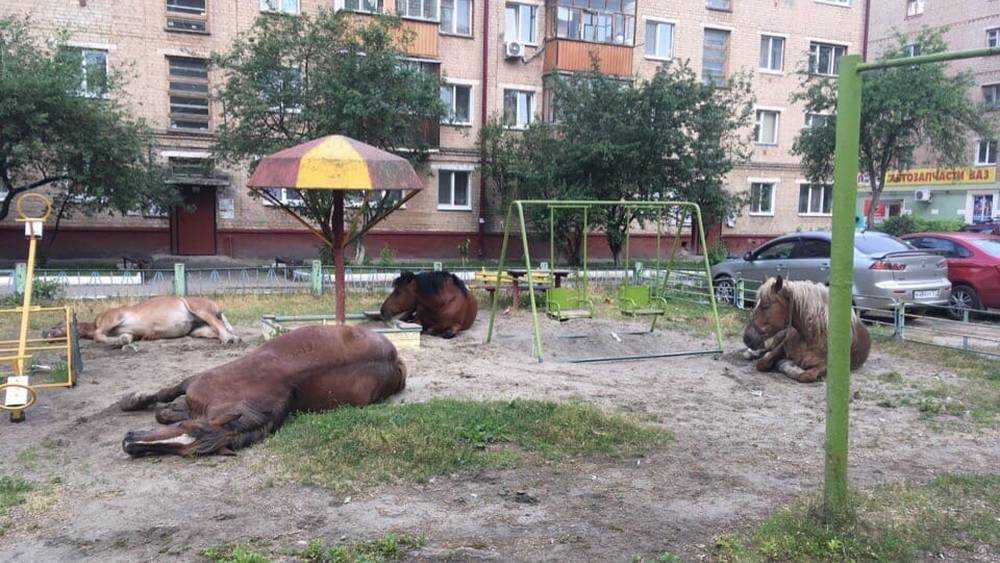 Сонные лошади заняли детскую площадку в Брянске