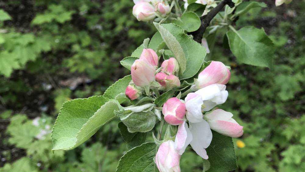 В Брянской области площадь садов достигла 3 тысяч гектаров