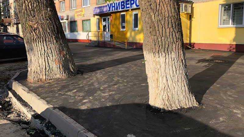 Брянские дорожники замуровали асфальтом деревья